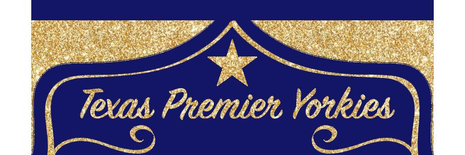 Texas Premier Yorkies